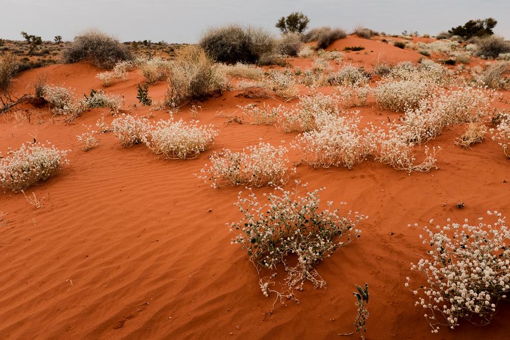 Hay River Track Simpson Desert NT