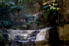 Ward's canyon, Carnarvon Gorge National Park QLD