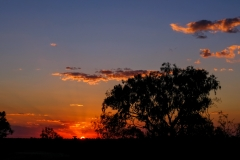 Suset Welford National Park QLD