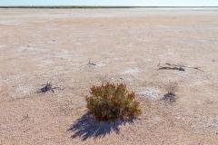 2016 Simpson Desert-31