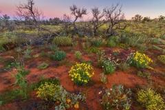 2016 Simpson Desert-52